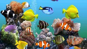 सपने में मछली देखना शुभ है या अशुभ