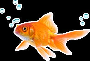 सपने में मछली देखना मतलब