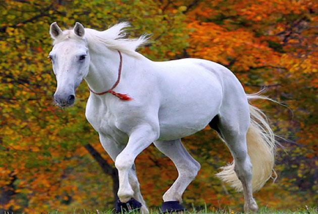 सपने में घोड़े को देखना मतलब