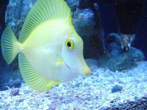 सपने में मछली खाते हुए खुद को देखना मतलब