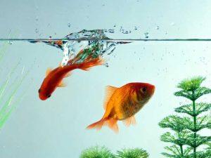 सपने में मछली पकड़ने का मतलब क्या है