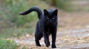 सपने में काली बिल्ली दिखाई देना