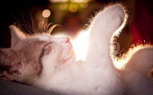 सपने में बिल्ली का नाखून मारना