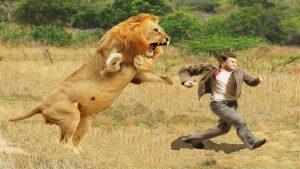 सपने में शेर किसको दिखता है और क्यों दिखता है