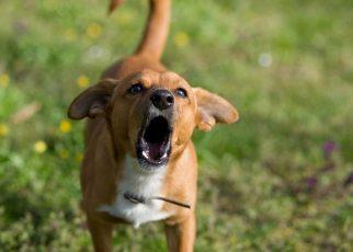 सपने में कुत्ता भोंकते देखना मतलब क्या होता है