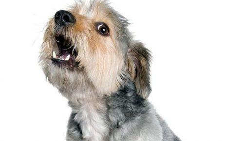 सपने में कुत्ते का रोना दिखाई देना