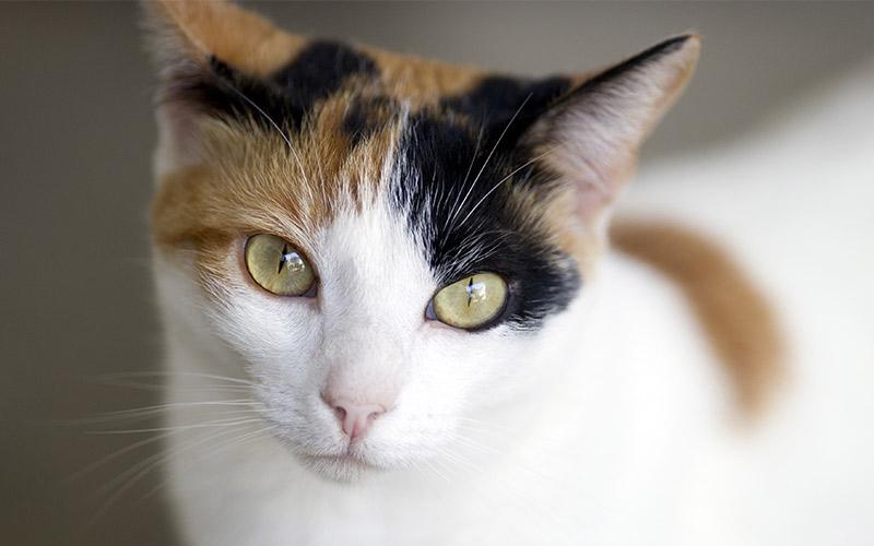 सपने में भूरी बिल्ली देखना