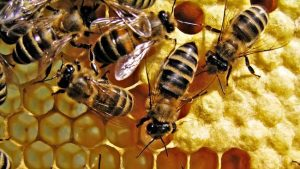 सपने में मधुमक्खी का छत्ता देखना
