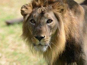 सपने में शेर को देखने का मतलब क्या होता है