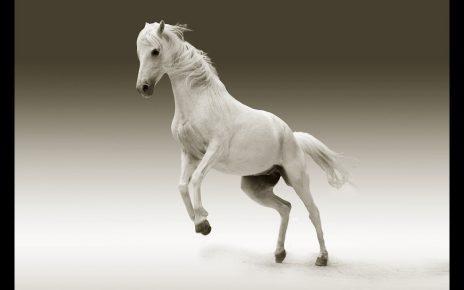 सपने में सफेद घोड़ा देखना मतलब क्या होता है